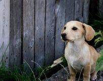 Perro paciente Imagenes de archivo
