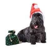 Perro Papá Noel Foto de archivo libre de regalías