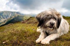 Perro pastor imagen de archivo libre de regalías