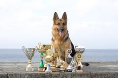 Perro pastor con las concesiones Imagen de archivo libre de regalías