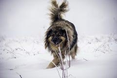 Perro pastor grande en la nieve Foto de archivo