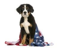 Perro patriótico que se sienta con la bandera americana Imágenes de archivo libres de regalías