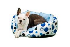 Perro peludo en cama del perro Fotos de archivo libres de regalías