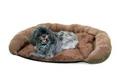 Perro peludo en cama del perro imagen de archivo