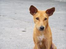 Perro perdido Imágenes de archivo libres de regalías