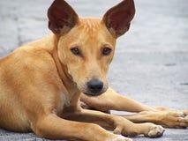 Perro perdido Imagen de archivo libre de regalías
