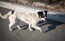 Perro perdido. Imagen de archivo libre de regalías