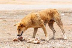 Perro perdido Imagenes de archivo