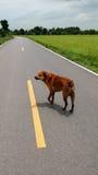Perro perdido Fotos de archivo libres de regalías