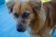 Perro perdido Foto de archivo libre de regalías