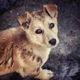 Perro perdido Fotografía de archivo