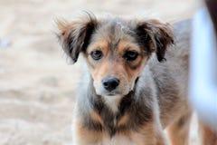 Perro perdido abandonado en la playa Imagen de archivo libre de regalías