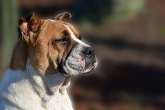 Perro perdido del híbrido imagen de archivo libre de regalías