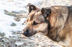 Perro perdido del uno mismo Fotos de archivo libres de regalías