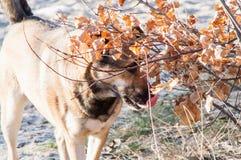 Perro perdido del uno mismo Imagenes de archivo