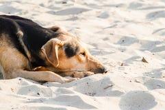 Perro perdido del uno mismo Fotos de archivo