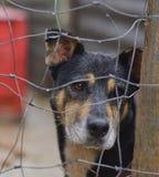 Perro perdido detrás del corral de un refugio del perro Fotografía de archivo