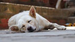 Perro perdido el dormir fotografía de archivo