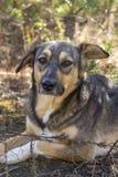 Perro perdido en el bosque, hambriento y cansado Foto de archivo