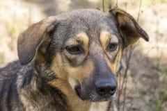 Perro perdido en el bosque, hambriento y cansado Imagen de archivo