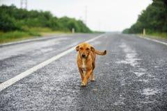 Perro perdido en el camino Fotos de archivo libres de regalías