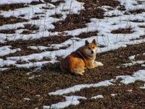 perro perdido, en el campo, colocándose bien en el marco Imagen de archivo libre de regalías