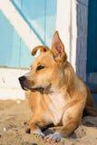 Perro perdido en la arena Imagenes de archivo