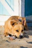 Perro perdido en la arena Foto de archivo libre de regalías