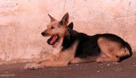 Perro perdido en Odessa, Ucrania Fotos de archivo libres de regalías