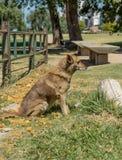 Perro perdido en parque Imagen de archivo libre de regalías