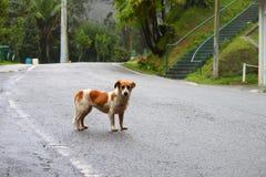 Perro perdido en Puerto Rico Fotografía de archivo