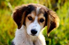 Perro perdido lindo Imagenes de archivo