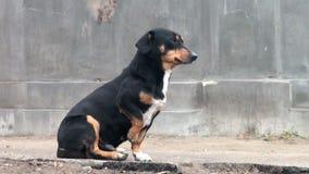 Perro perdido negro que se sienta en los patios traseros de la acera