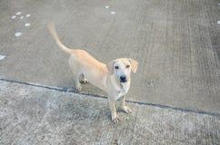 Perro perdido precioso Imagenes de archivo