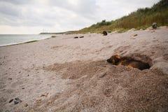 Perro perdido que duerme en la playa Fotos de archivo