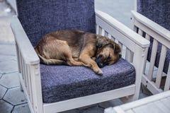Perro perdido que duerme en una silla en una cafetería Foto de archivo