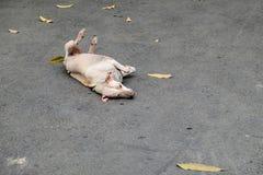 Perro perdido que miente en piso concreto Imagen de archivo libre de regalías
