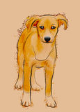 Perro perdido sin hogar ilustración del vector