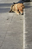 Perro perdido sin hogar fotografía de archivo