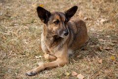 Perro perdido sin hogar Fotos de archivo
