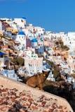 Perro perdido sin hogar que se sienta en la pared de piedra en la ciudad de Oia, Santorini, Grecia Foto de archivo libre de regalías