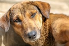 Perro perdido soñoliento fotografía de archivo