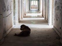 Perro perdido solo Fotos de archivo libres de regalías