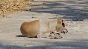 Perro perdido viejo que se sienta en la tierra almacen de metraje de vídeo