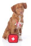 Perro perdiguero con el equipo de primeros auxilios Fotos de archivo