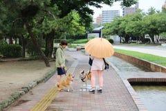 perro perdiguero de la mujer y del animal doméstico que camina en el parque Foto de archivo