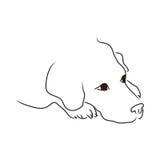 Perro perdiguero de oro Imágenes de archivo libres de regalías