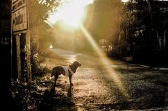 Perro perdiguero de oro Fotografía de archivo libre de regalías