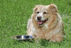 Perro perdiguero de oro 9050 Fotos de archivo
