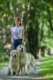 Perro perdiguero dos en el parque Fotos de archivo libres de regalías